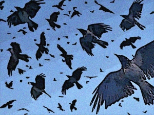 julia crows